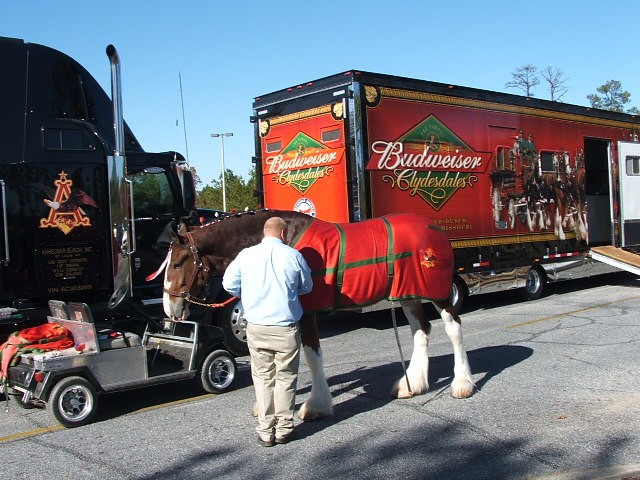 How the Budweiser Clydesdales are the NFL's Workhorses
