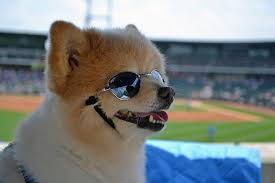 Pups in the Park: A Tradition Unlike Any Other